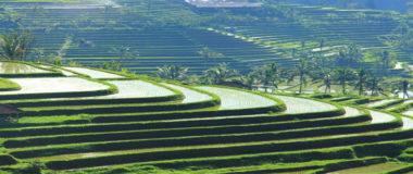 Jatiluwih - Agriculture and agro tourism tour
