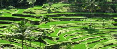 Four days tour in Bali